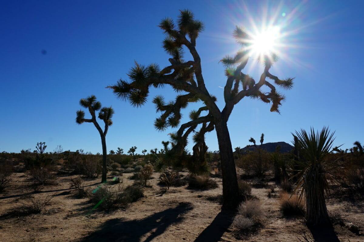 Guide To Exploring Joshua Tree With Kids (+ 1 Day Itinerary)
