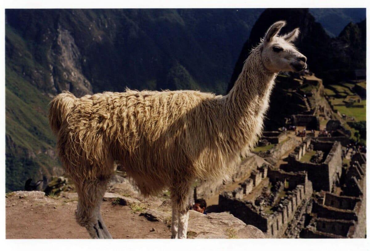 Travel Memories: Machu Picchu