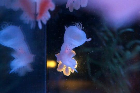 Jelly's at Cabrillo Marine Aquarium in San Pedro, CA