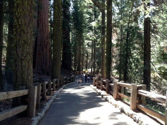 Sequoia National Park in One Day