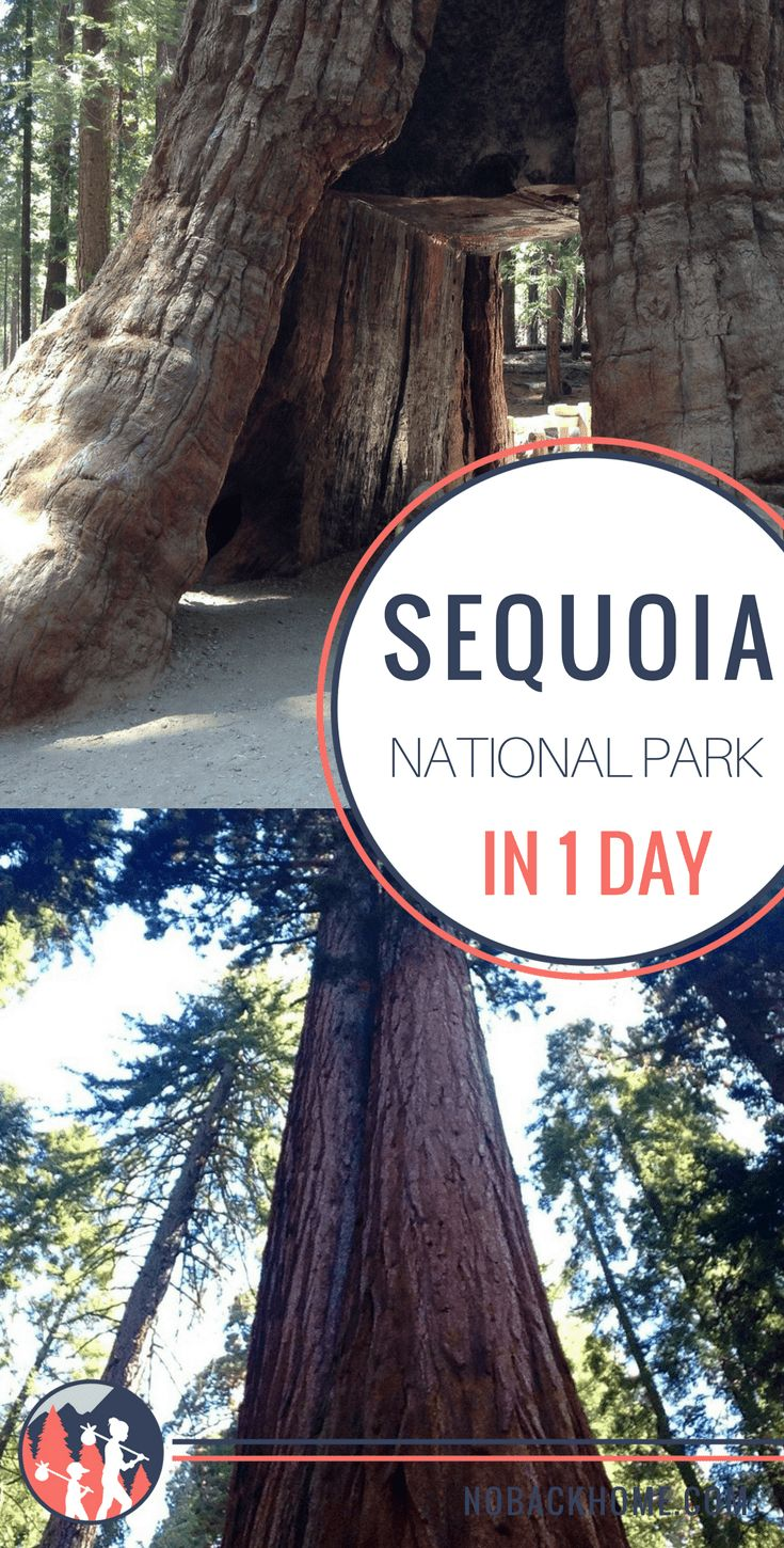 What to do and see in Sequoia National Park in a 1 day visit.