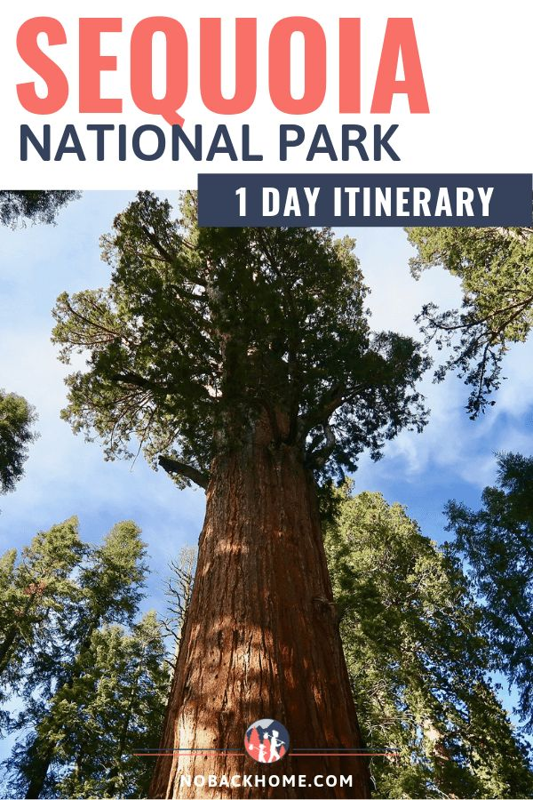 If you are near Yosemite, you must make a visit to Sequoia National Park even if it's just for one day. #sequoia #itinerary