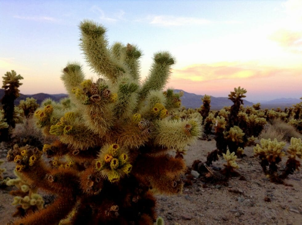 Top 5 Things to do in Palm Springs with Families includes going to Joshua Tree!