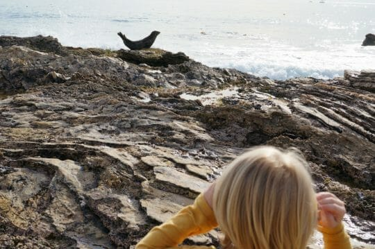 year in review: Crystal Cove Beach