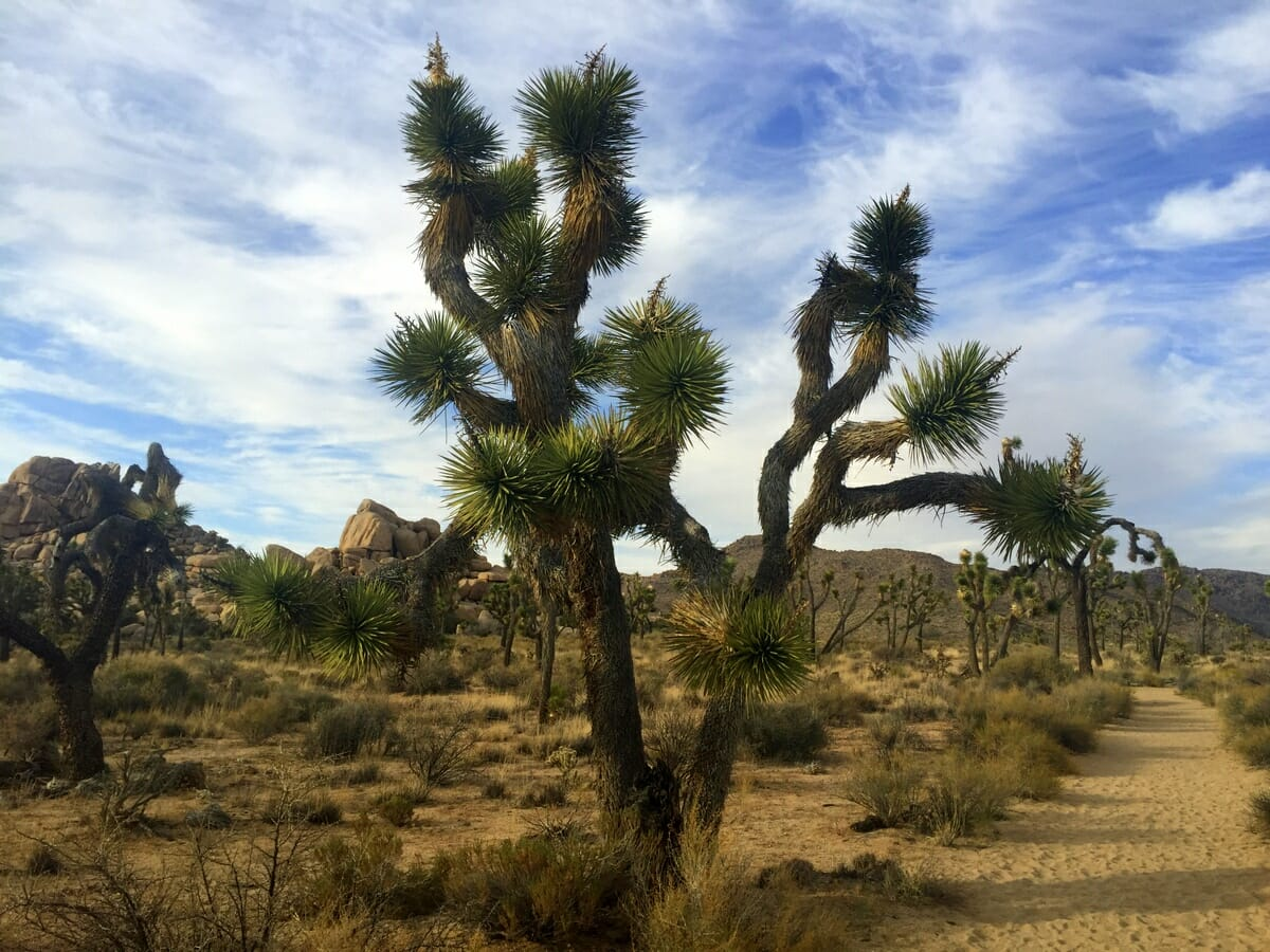 Get Off The Beaten Path With Joshua Tree Excursions