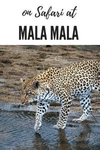Being on Safari at Mala Mala game reserve in South Africa will ensure that you see the Big 5 and many more amazing animals