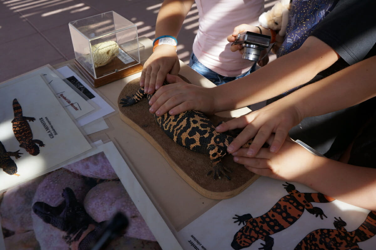 Top 10 Things to do in Tucson for families - Arizona Sonoran Desert Museum