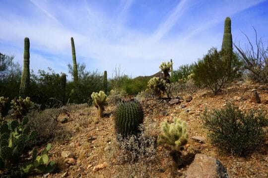 Top Things to do in Tucson for families