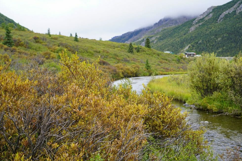 Alaska road trip with Thrifty Rental Car -Denali National Park