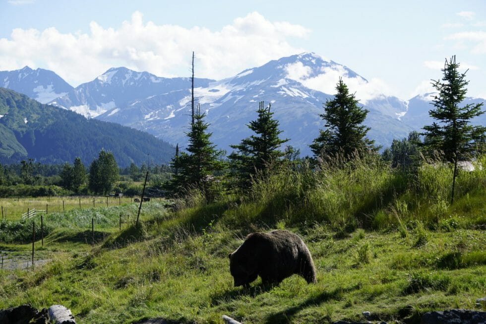 Alaska road trip itinerary -Alaska Conservation Center