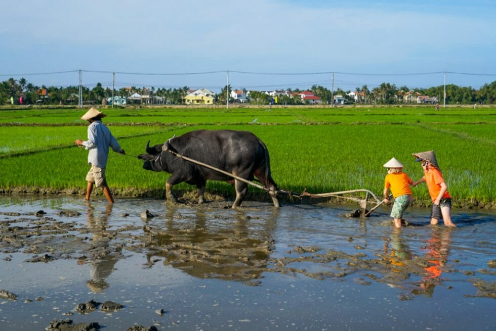 Wondering what to do in Hoi an with kids? Head out to a village visit!