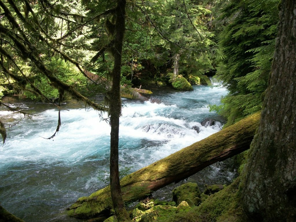 7 Must Visit Spots On The McKenzie River, Oregon